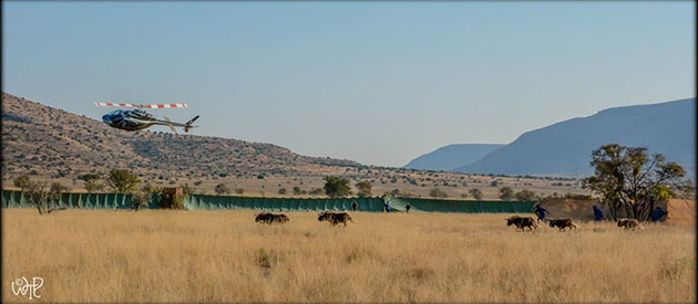 Conservation at Mountain Zebra National Park, sanparks, www.eastern-cape-info.co.za