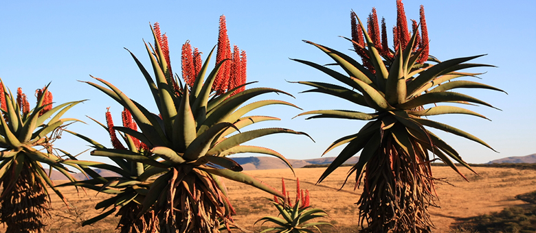 Cradock Info, Eastern Cape, South Africa, www.cradock-info.co.za, Accommodation, Activities